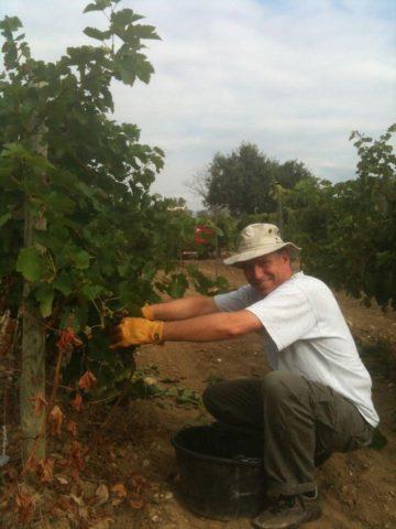 Arne van der Wal: 'Back to basics: ik wilde wel eens zien hoe wijn echt wordt gemaakt. Druiven plukken in de Provence was een lang gekoesterde droom.'